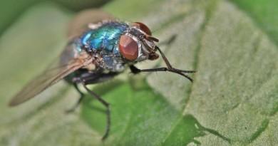 蟻俠現實版! 昆蟲複眼鏡頭植入微型無人機