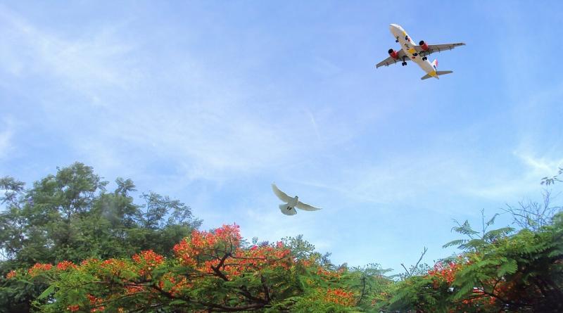 由於目擊物體描述含糊,FAA 可能誤把雀鳥同列為無人機。