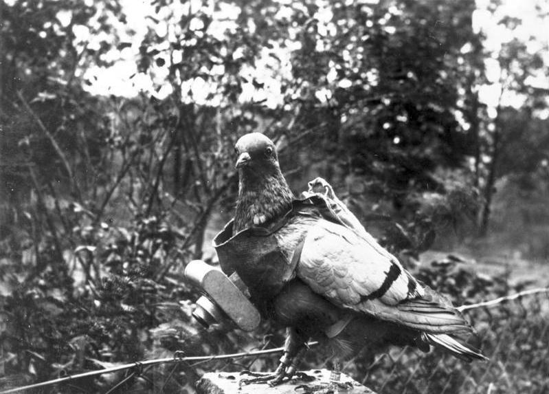 這隻鴿子總是在「X 個一戰的○○○」列表出現,胸前有部 GoPro 小型相機,似模似樣,又有點超現實,一時之間教人難以置信--轉貼之後才發現是 PS 的,不就出糗了嗎?
