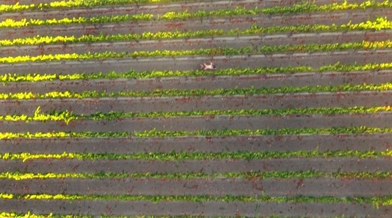 航拍色情片《Drone Boning》的田野場景