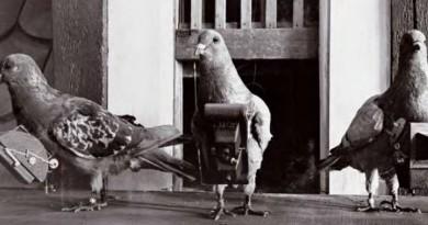 一戰時已有航拍飛行器!飛鴿空拍機曾是德軍的秘密武器