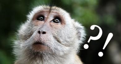 東京擬設無人機特區 方便送貨‧救災‧趕猴子?