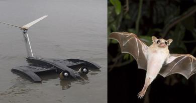 蝙蝠俠都很想要吧!蝠翼無人機機翼隨風變形•飛得更遠
