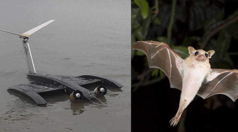 蝙蝠 無人機