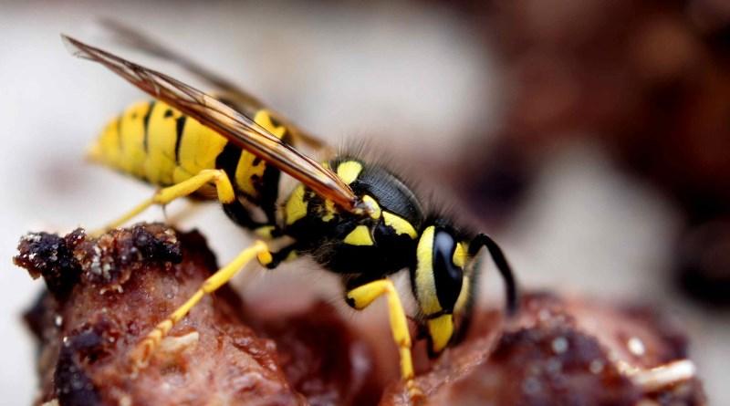 黃蜂視野有助研發自動導航技術