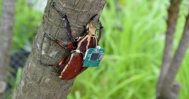 科學家替甲蟲 (活的!!)裝上控制器,造出了生物無人機!