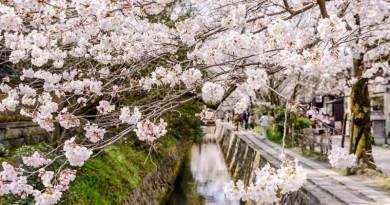 中國留學生用無人機空拍京都櫻花 涉嫌違反航空法被控