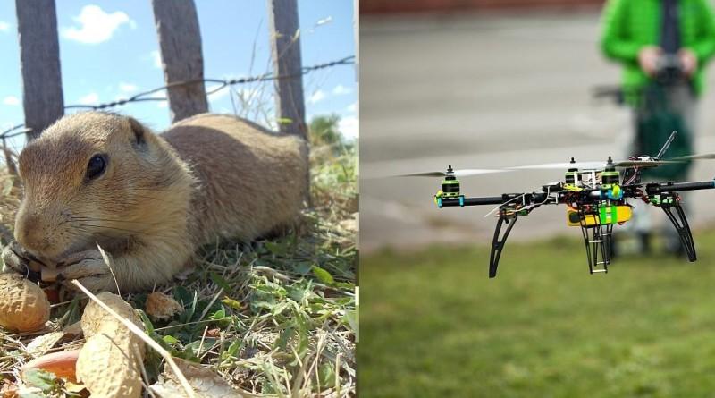 美國派出無人機為土撥鼠送藥