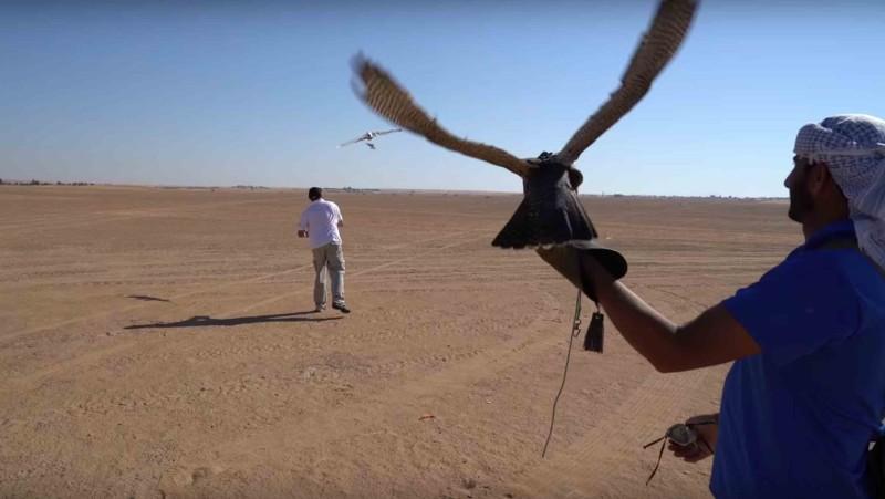 杜拜用無人機訓練獵隼。
