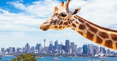 悉尼打造高科技動物園 AR•無人機•機器人野生導航