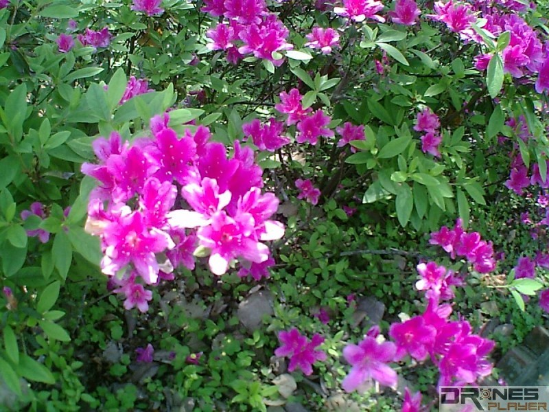 Hubsan H107D+ 空拍機飛近花朵拍攝,畫質相當不俗。