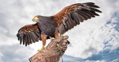備戰捕獵無人機最終試驗 老鷹出關在即