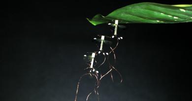 進化微型無人機 RoboBee 如昆蟲依附葉子懸停