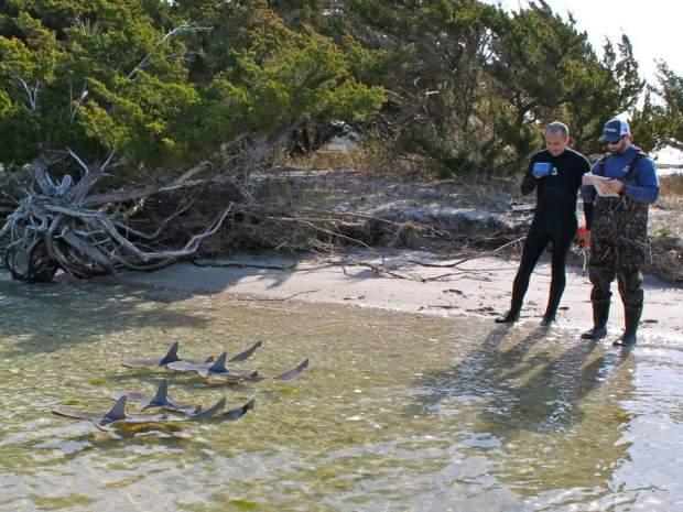 研究員用無人機監察鯊魚出沒。