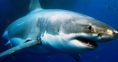 美國東岸無人機追蹤鯊魚 手機 app 實時監察位置