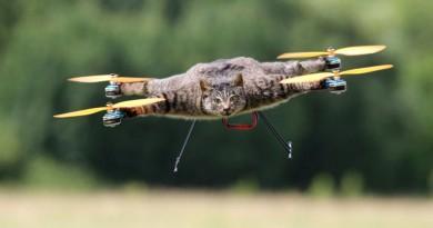 另類寵物善終服務?荷蘭藝術家把離世貓咪改裝成無人機