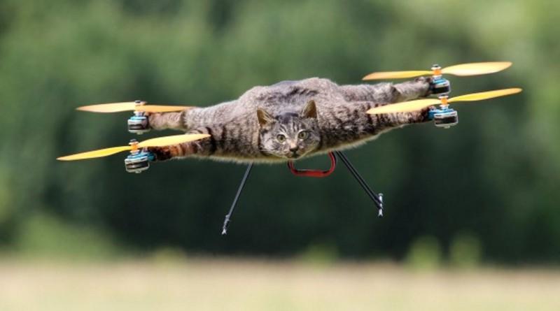Bart Jansen - Copter Company - 動物標本無人機