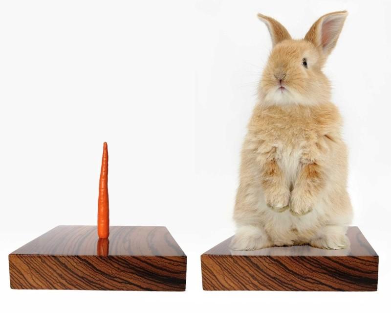 Rabbit Stand:Bart Jansen 偶爾也會創作看上來較普通的作品──據悉這是令兔子無法逃走的裝置。