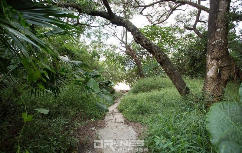 留意燈柱 EA8618 左邊會一條小路,沿著小路走,便可到達海星灣灘。