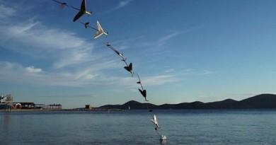 AquaMav 海空兩棲無人機 模仿塘鵝俯衝入水•飛魚躍出水面