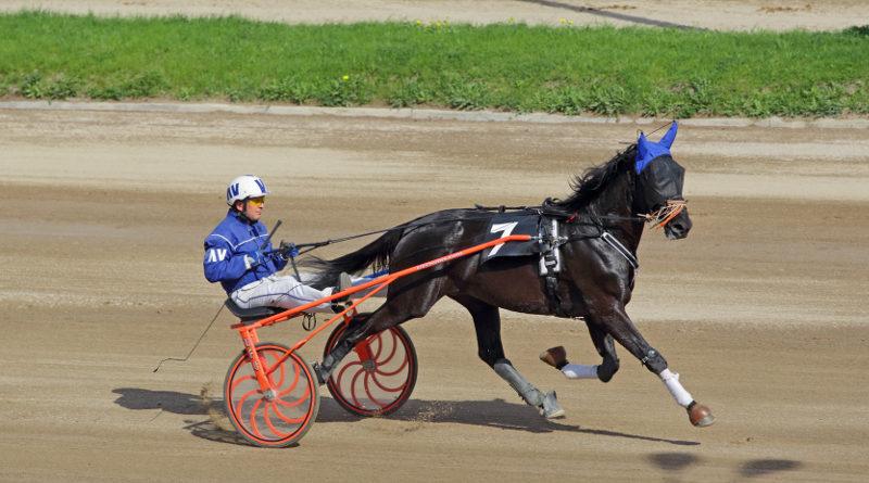 賽馬車(harness racing)(照片來源:ID1974 / Shutterstock.com)