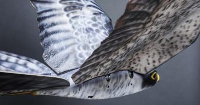 Robird 拍翼偽裝猛禽覓獵物 嚇退機場的好奇小鳥