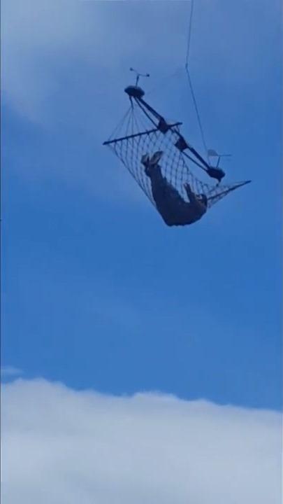 吊床上的男生在飛行期間,看似是一面看風景,一面品嘗啤酒!